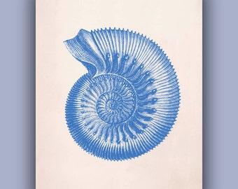 Ammonite Seashell Print, 11x14 Print, marine fossil Natural History Wall Decor, Nautical art,  Coastal Living, beach cottage decor