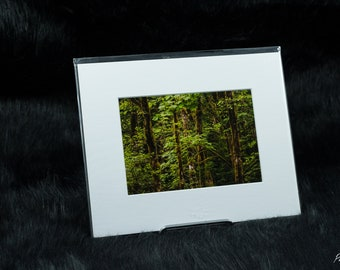 The Trees Photography Print, Abstract Tree Print, Pacific Northwest Art