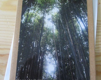Tall Trees I Blank Greeting Card Photography