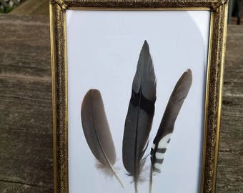 Framed Morning Dove/Woodpecker Feathers/Wall Art/Home Decor