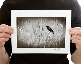 Red-winged Blackbird Photograph (9 x 6 inch Fine Art Print) Black & White Bird Photograph Nature Home Decor