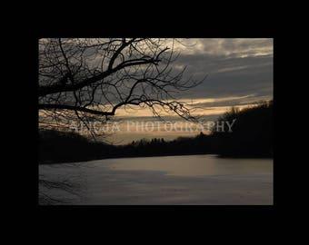 Tree Photo, Print, Photograph, Art Decor, Wall Decor, House Decor, Fine Art Photography
