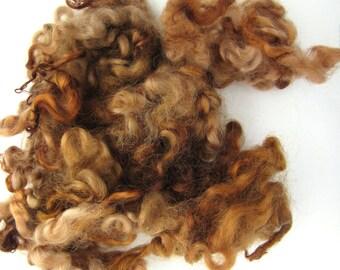 Brown Sheep Locks - Sheep Curls - Waldorf - Spinning Wool Curls - Leicester Lamb - 1/2oz