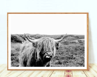 Farm Animal Wall Art, Highland Cow Photo, Animal Portrait, Cow Printable Poster, Cattle Photography, Farm Nursery Poster, Instant Download