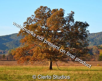 Tree in Cades Cove, TN - digital download