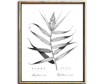 Botanical Print Vintage, Black and White Botanical Prints, Printable Art, Instant Download, Modern Farmhouse, Rustic, Wall Decor, Art Prints