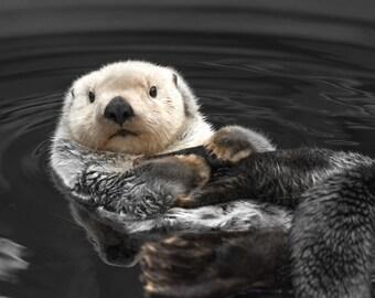Cute Animal Photography, Sea Otter Print, Cute Print, Cute Art, Animal Print, Otter Art, Cute Photography
