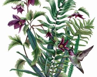 Fine Art Print of Original Watercolor Painting - Nature's Jewels