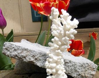 "Rare Real Branch Coral 2.5L x 2W x 6.5H"" Aquarium & Betta Fish Tank / Wedding / Craft / Nautical / Ocean / Reef / Sea Themed Decor"
