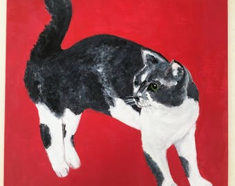 A Gray-White Cat in Red