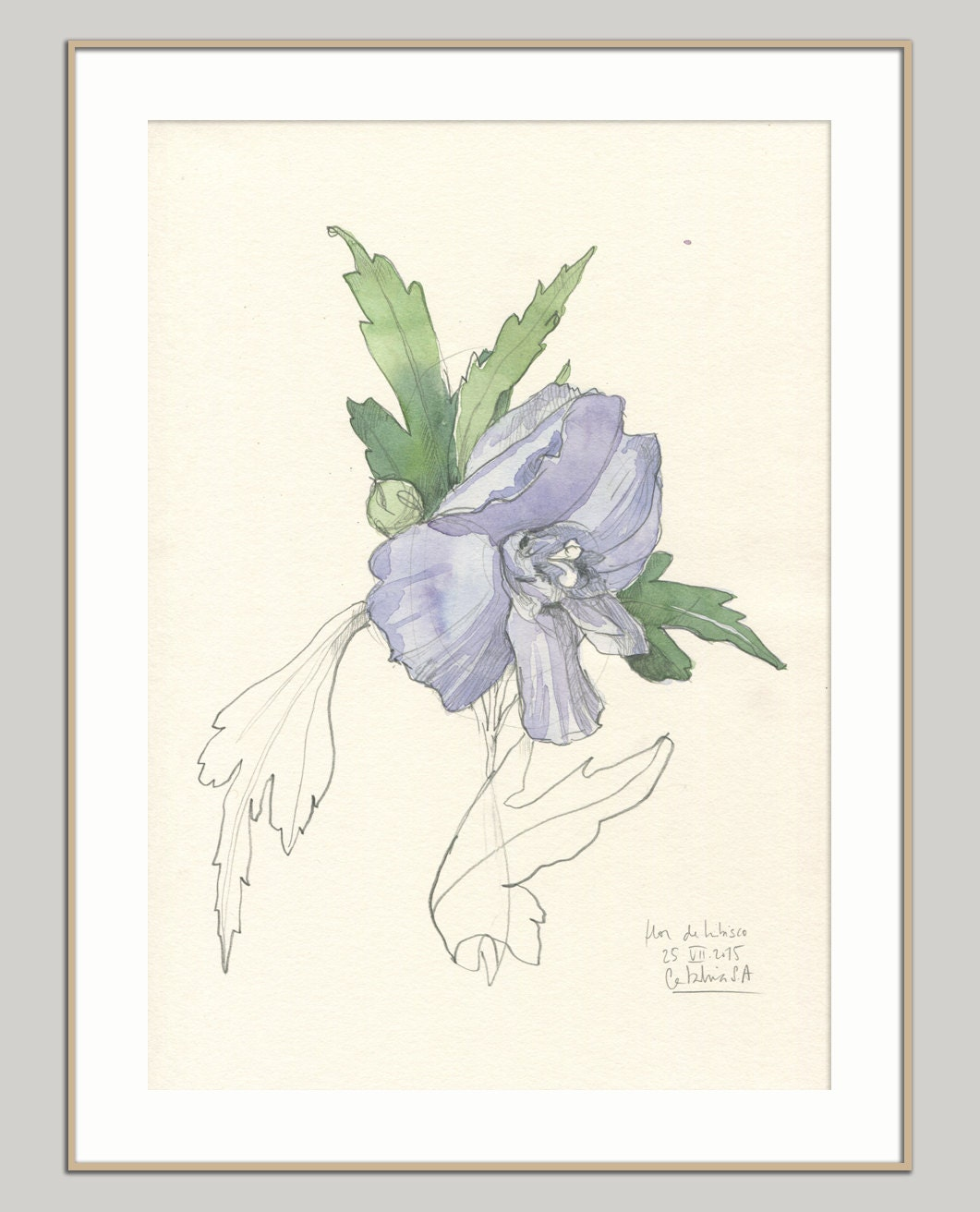 Hibiscus Drawing 1 Original Watercolour And Pencil Drawing