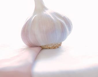 Pink garlic (Food photo fine art)