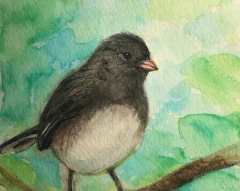 Junco watercolor