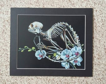 Marmoset Skeletal Articulation with Orchids Mounted Print