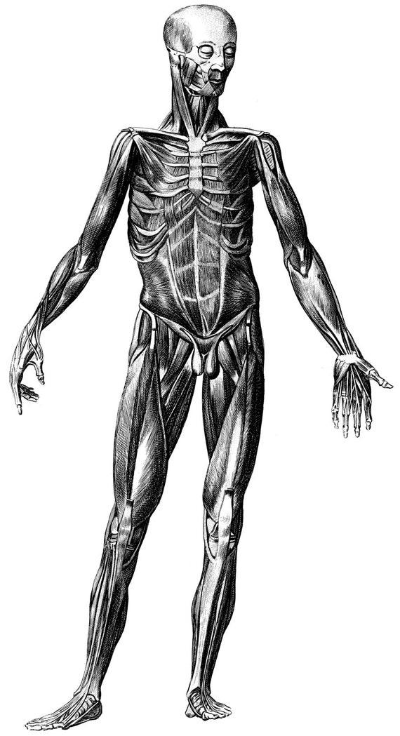 Skeleton Human Anatomy Old Medical Atlas Illustration Digital