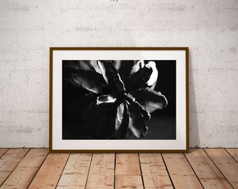 Black and White Print, Pinecone Photography, Floral Digital Downloads, Home décor Printable Art, Nature Photography,  Botanical Print