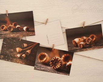 Set of 4 print posdcards Poppy seed pods , nature photography