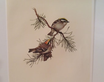 Vintage Golden Crowned Kinglet 1960s Frameable Picture, Wall  Art Print of Bird Watercolor by  J.F. Lansdowne Item 419