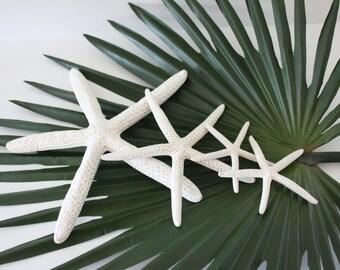 Bleached White Starfish- Bulk or Individual