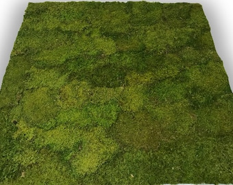Live Moss Panel for Interior Wall Featues