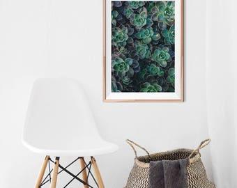 Impression succulente, Cactus Wall Art, Art imprimable, botanique imprimable, impression de cactus, décor Tropical, désert d'impression, téléchargement immédiat