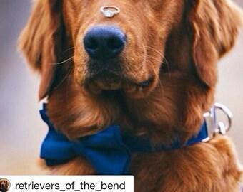 Royal Blue Layered Dog Bow Tie - Optional Matching Dog Collar Dog Leash - Horizon Blue - Dog Of Honor Bow Tie