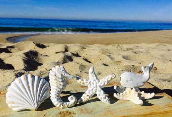 Nautical Drawer Knobs / Nautical Door Knobs / Seashell Knob /