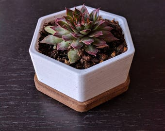 Small Hexagonal Planter with Water Tray