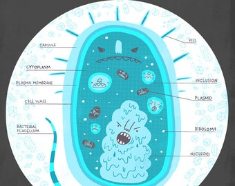 Inside The Bacteria Cell Anatomy Poster