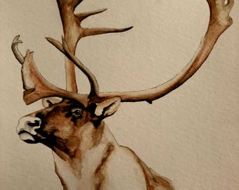 Watercolor Caribou Bull