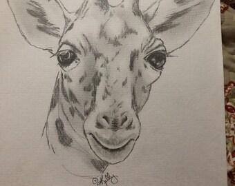 Baby giraffe in pencil