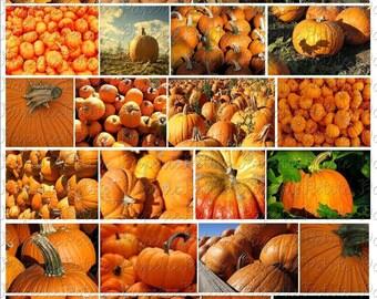 Pumpkin Harvest Digital Download Collage Sheet
