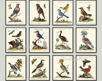 Bird Print Set of 12 Art  Antique Beautiful Blue Red Birds Green Forest Garden Tree Nature Bird Watching  Chart Home Room Wall Decor