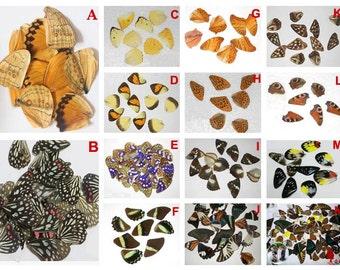 30pcs real butterfly wings,3D Butterfly specimens wings,Real Dried Moth butterflies wings for ring/earrings/necklace/framed butterflies