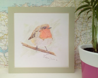 Red Robin colour pencil drawing