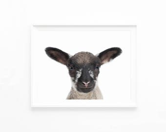 Lamb Print, Baby Animals Nursery Decor Wall Art Print Printable Digital Download, Baby Sheep Wall Art, Farmhouse Woodland Nursery, l1c1c1