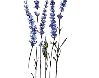 Lavender 8x10 Print