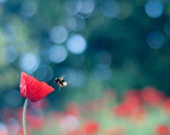 Art de la nature, Decor mural coloré, imprimé abeille, photographie, Art Floral, coquelicot, «Attraction»