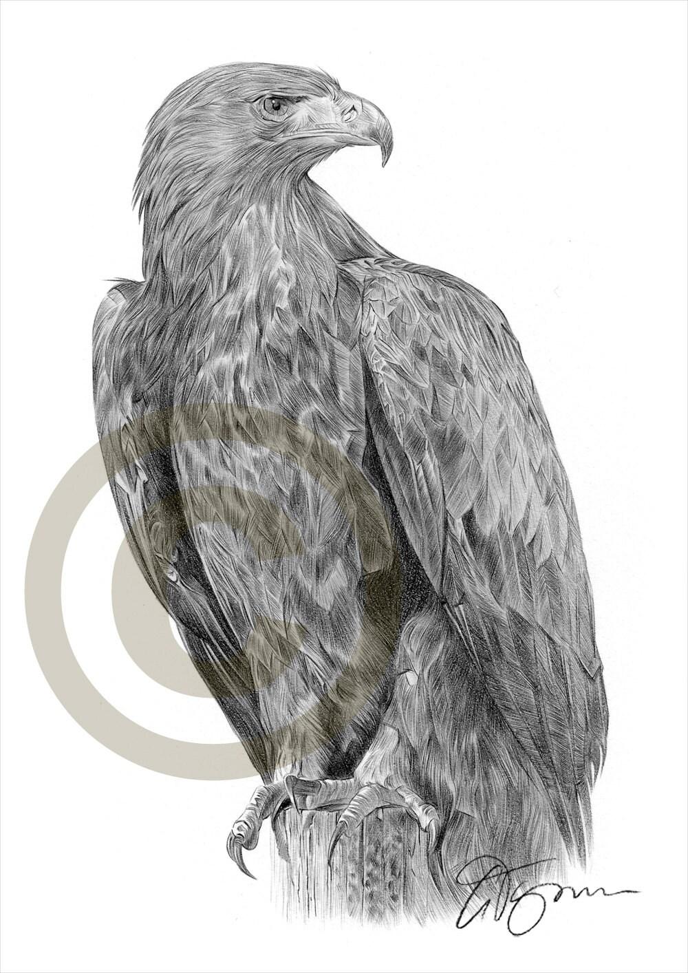 vogel steinadler bleistiftzeichnung drucken a4 gr e. Black Bedroom Furniture Sets. Home Design Ideas