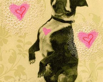 Valentine's Day Card. Boston Terrier. Valentines Day.