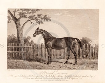 Vintage Sporting Horse Printable Illustration 1800s Antique Horses Art Print Equestrian Instant Download Wall Decor ZS