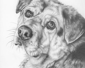 Custom Pet Portrait in Graphite - 14x17