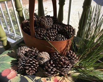 "2"" Georiga Loblolly Pine Cones (48 QTY)"