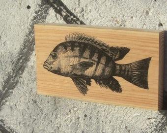 Wooden Print - Black Perch | Wood | Print | Wall Art | Decor | Natural Prints | Surf Art