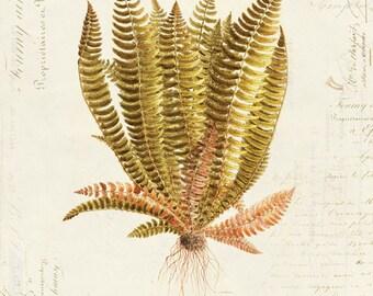 Vintage Botanical Fern Plant on French Ephemera Print 8x10 P38