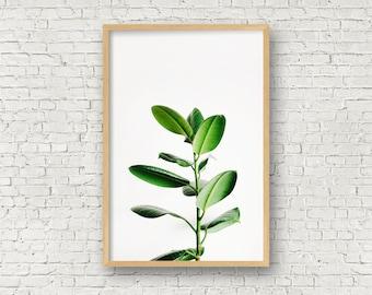 Rubber plant print,Leaves print,Leaf Photography,Plant art prints,Minimalist plant poster,Modern art,Tropical Leaf Decor,Modern Botanical