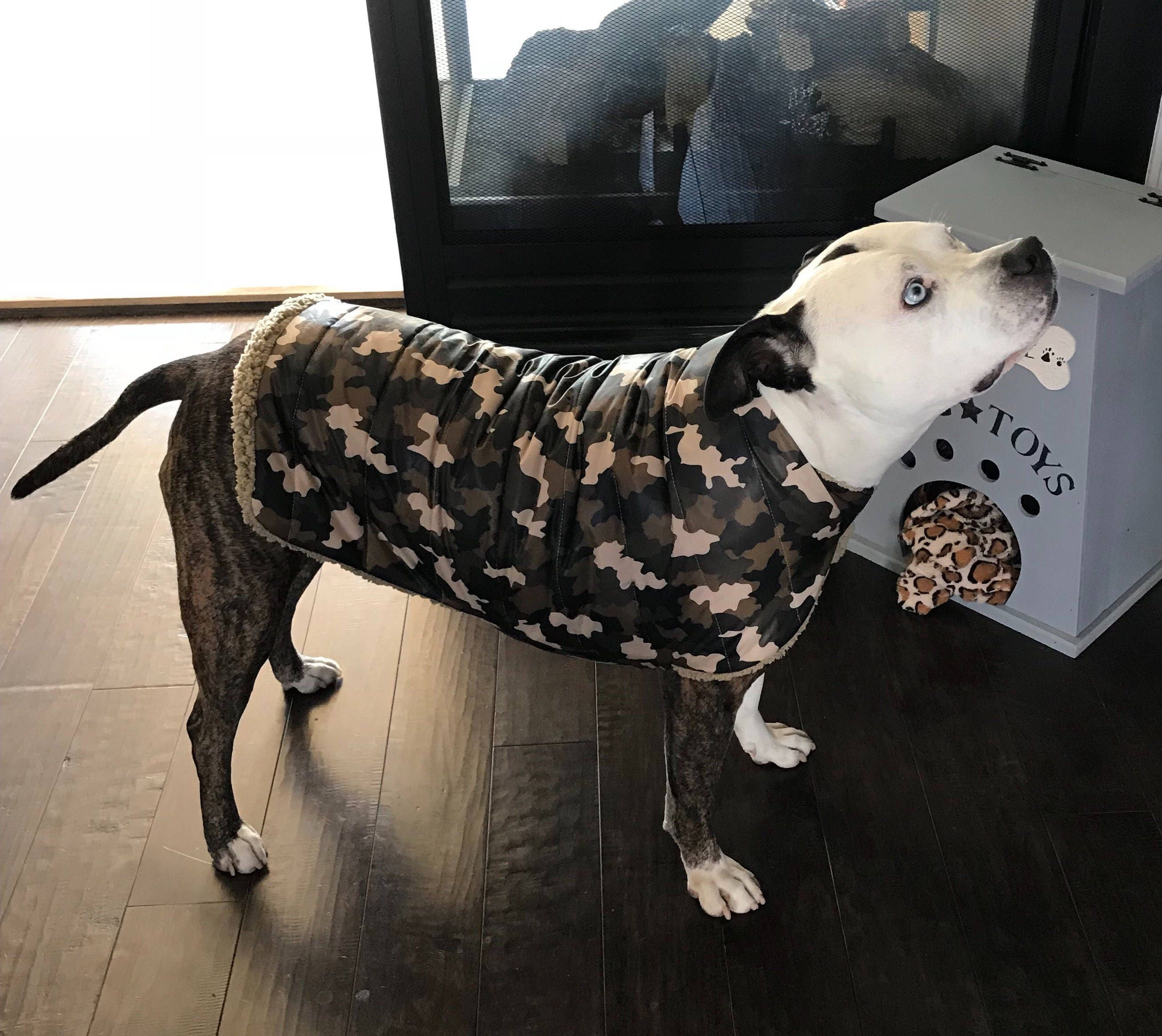 Video Of Dog Gets His Own Collar And Coat