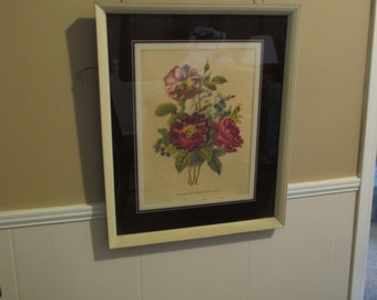 Vintage Les Roses Framed Print P.J. Redoute Picture