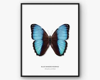 Butterfly Print, Butterfly Poster, Butterfly Wall Art, Butterfly Printable Art, Butterfly Decor, Nature Print, Scandinavian Print