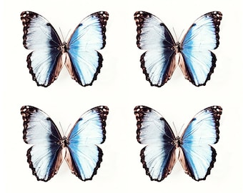 Butterfly Art Print, Large Nature Print, Butterfly Photography, Insect Art, Blue Butterflies, Natural Home Decor, Butterfly Photo, Large Art